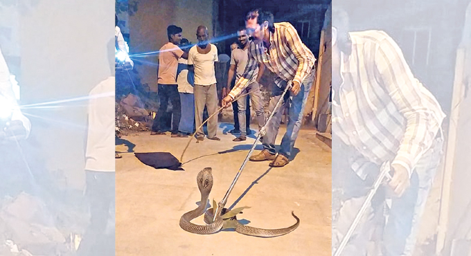 Snakes and the city of Hyderabad