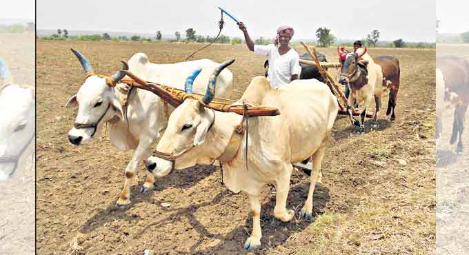 2.81 lakh more farmers to benefit from 'Rythu Bandhu' in Telangana